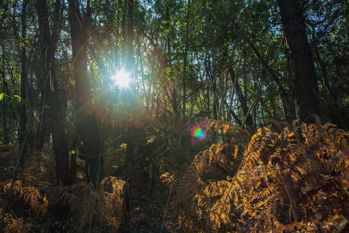 Stek 6 krijgt weinig zon, daarom noemen ze hem ook wel 'the Fridge'