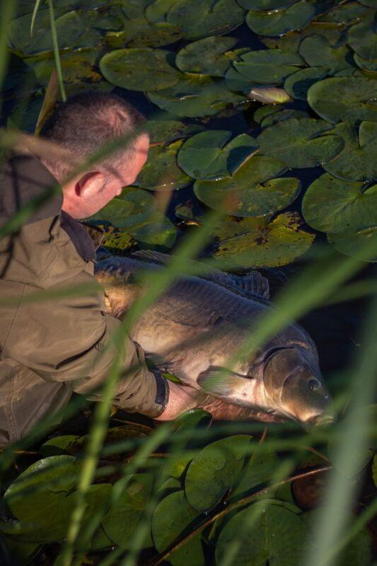 Het terugzetten van een mooie vis is altijd een bijzonder moment. Dit moment is hier prachtig vastgelegd.