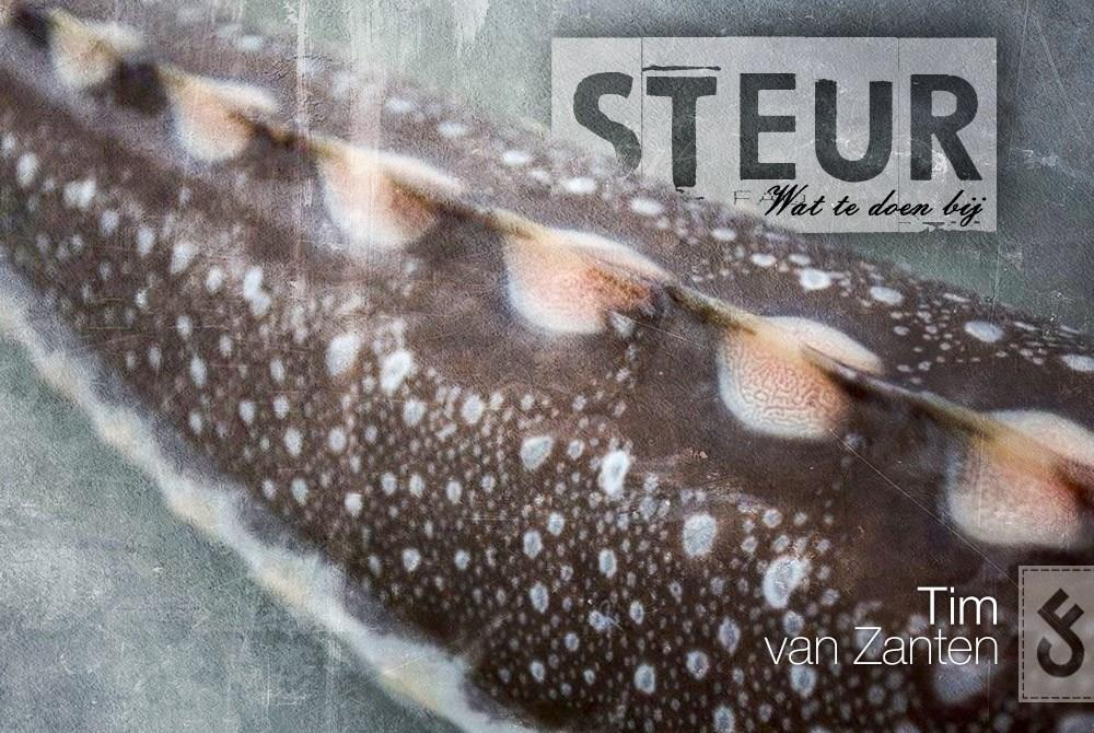 vissen-op-steur-carpfeeling1