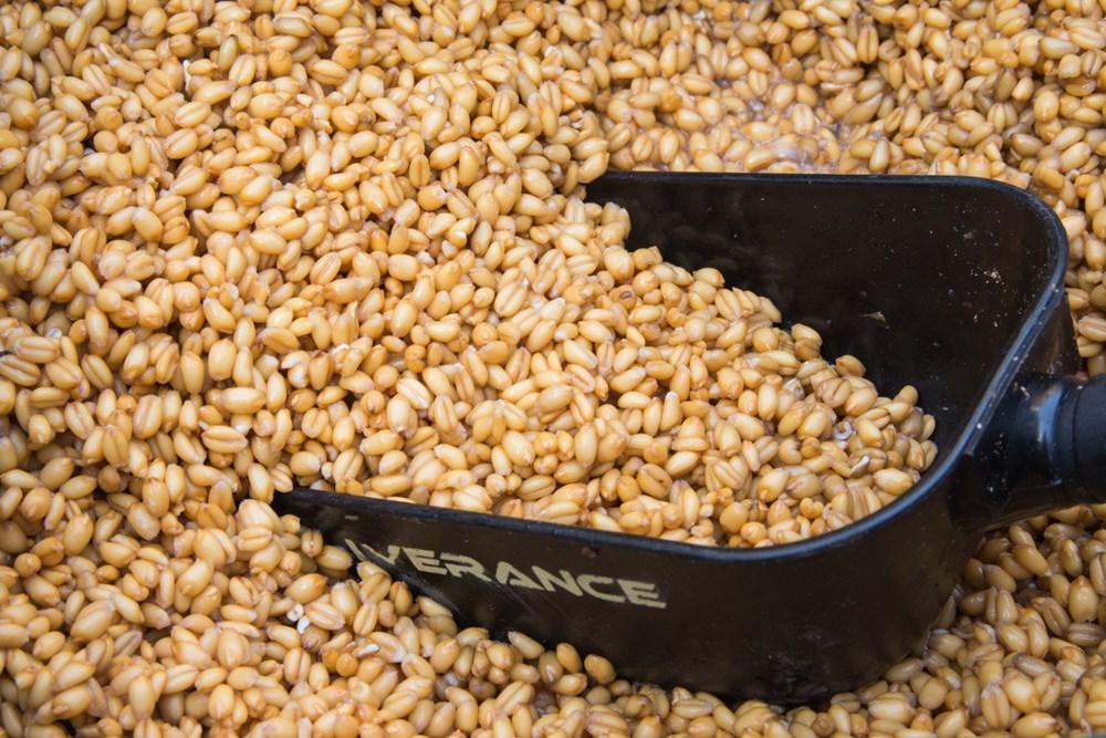 Het bereiden van tarwe-carpfeeling-1