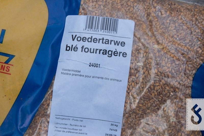 Het bereiden van tarwe-carpfeeling-2