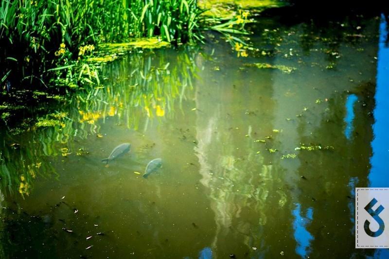 Een ondiepe zijtak van een kanaal waar de vissen zich verzamelen. (foto: Ricardo Koster)