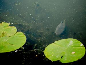 In het voorjaar zullen de vissen zoeken naar plekken om op te warmen.