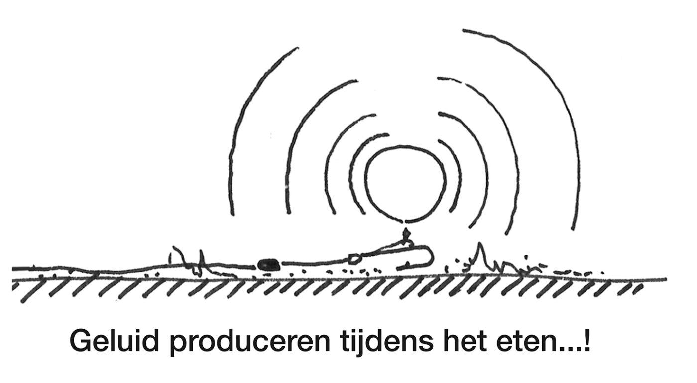 De invloed van geluid op karper