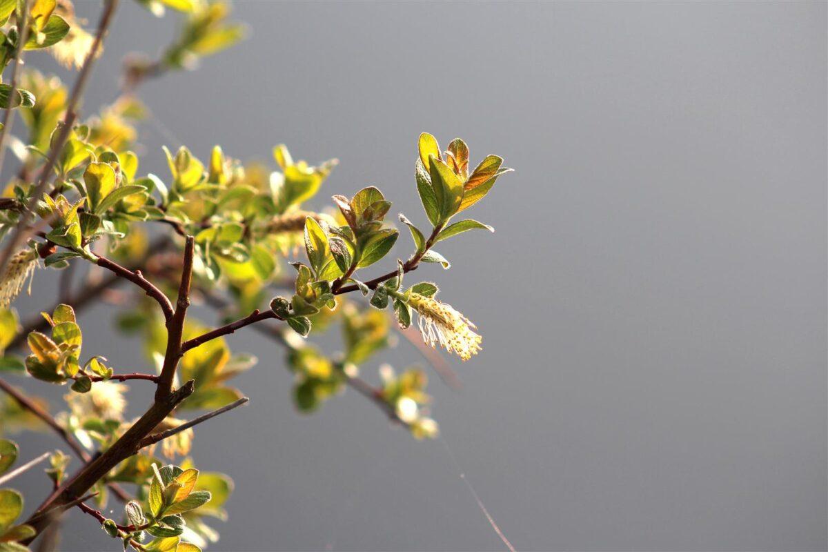 5x Effectieve voorjaarstactieken