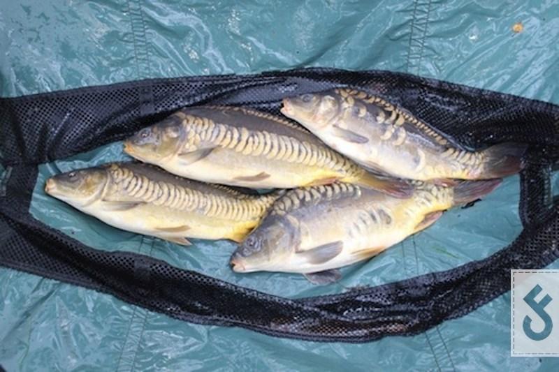 Zie hier K3 uitzettingen, gerealiseerd door Mark Hoedemakers die in de provinciale visserijcommissie te Limburg zetelt