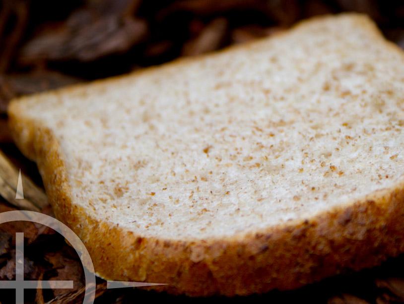 Brood, een geweldig aas voor het oppervlakte vissen op karper