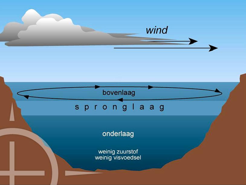 Deze schematische weergave van de spronglaag laat duidelijk het verschil in waterlagen zien