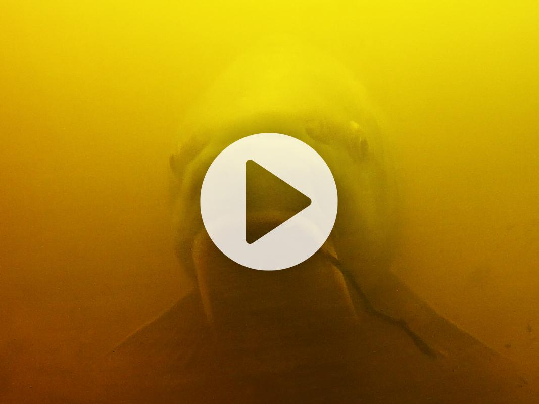 Vlog 10 Frank Avezaat