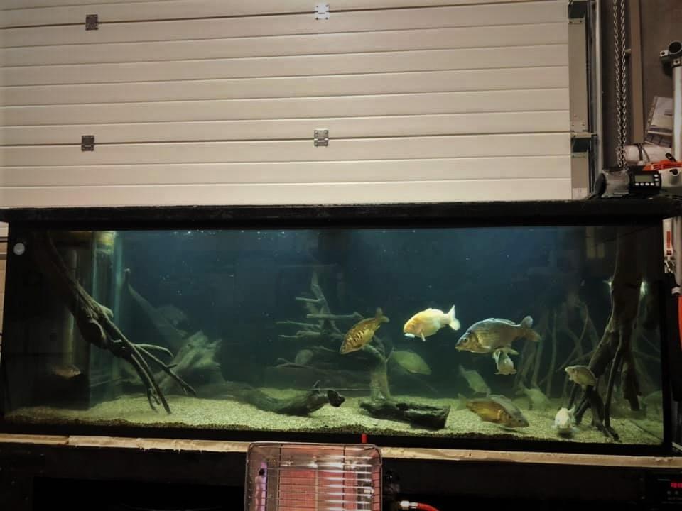 Ian haalt veel kennis en informatie uit zijn aquarium. Meer bepaald uit het gedrag van zijn karpers