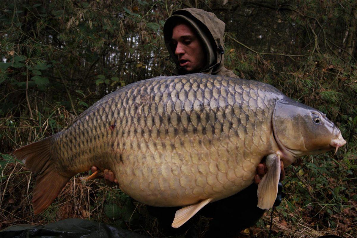 Het soort vissen waar Ian het allemaal voor doet. Spijtig genoeg een uitstervend ras.