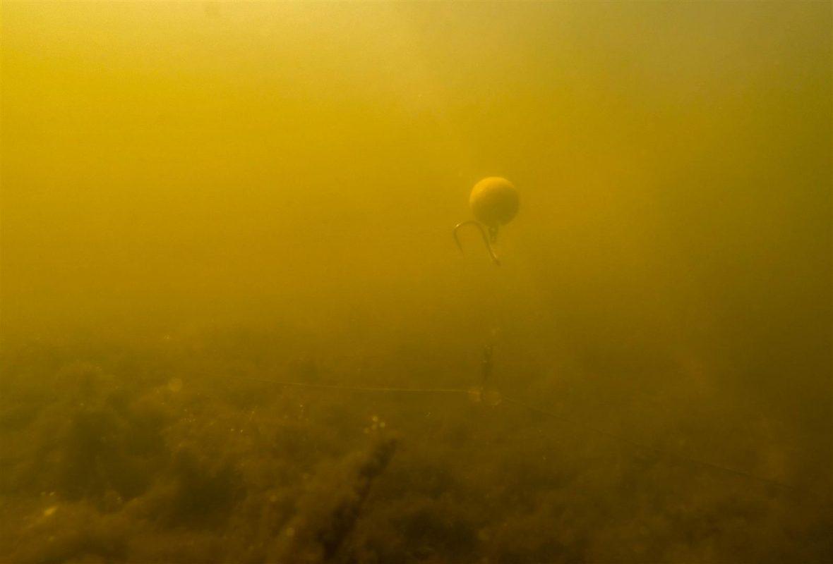 Onderlijnen: Drijvende pop-ups wekken de interesse van voorbij zwemmende vissen.