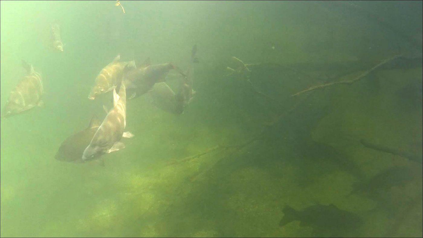 Een duidelijke holding waar de vissen zich ophouden bij dressuur